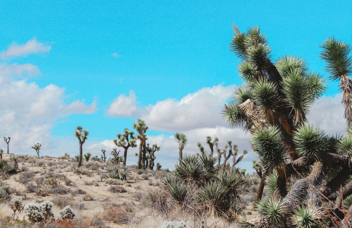 Weekend Getaway to Joshua Tree (Pt. 1)